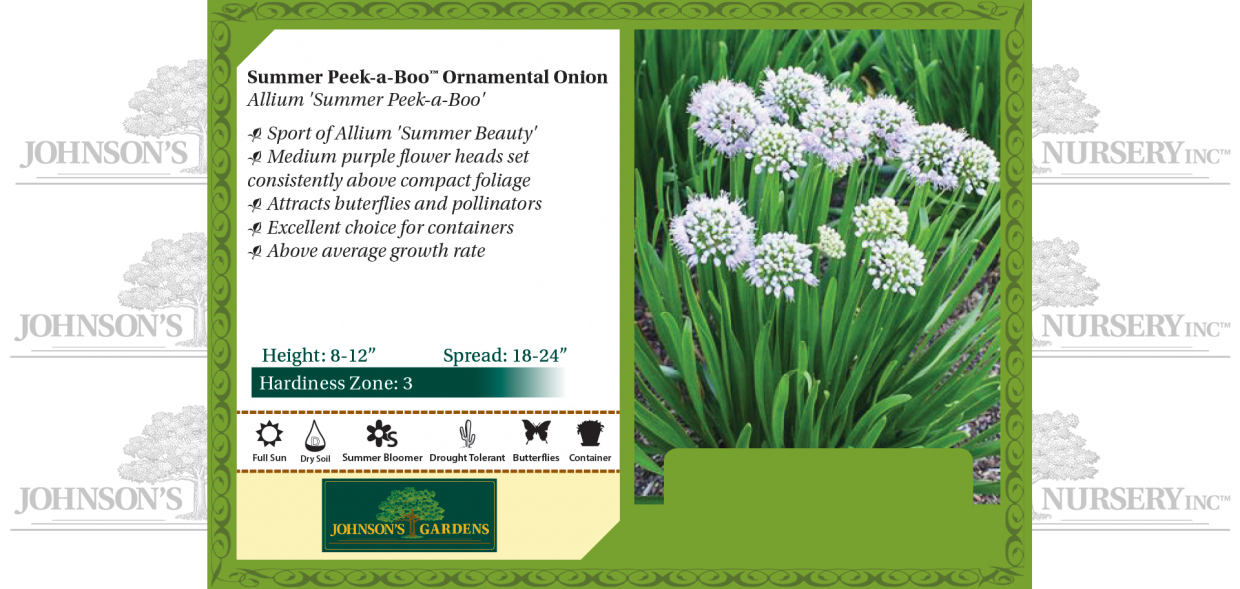 allium summer peek a boo benchcard